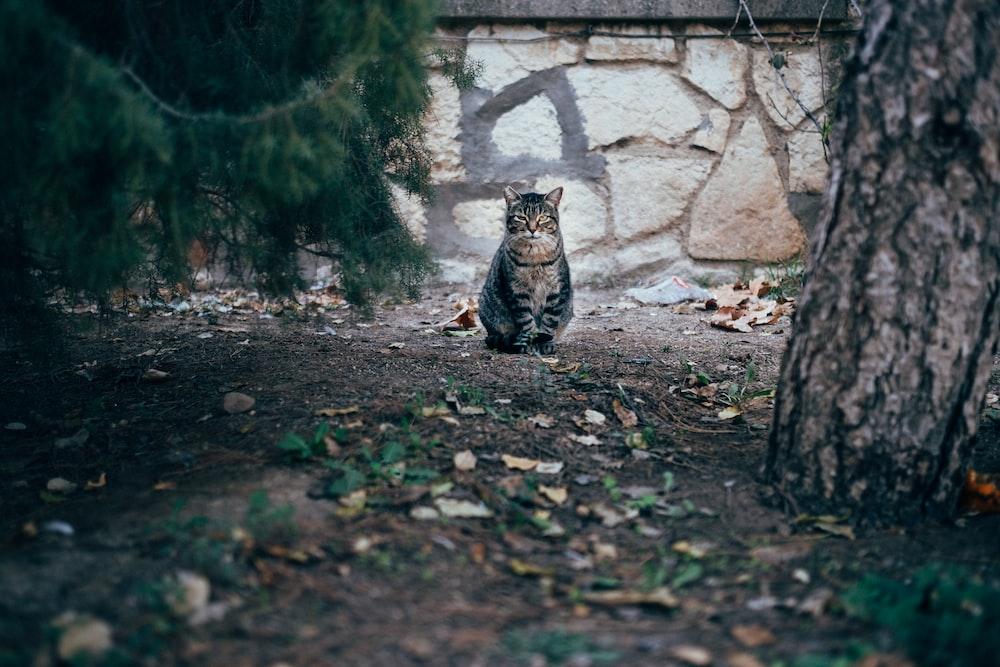 brown tabby cat standing near wall