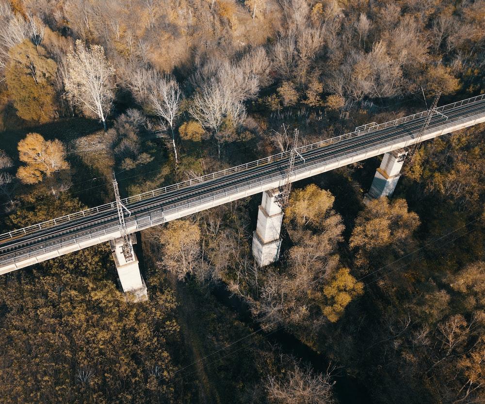 bird's-eye view photography of bridge in between leafed trees