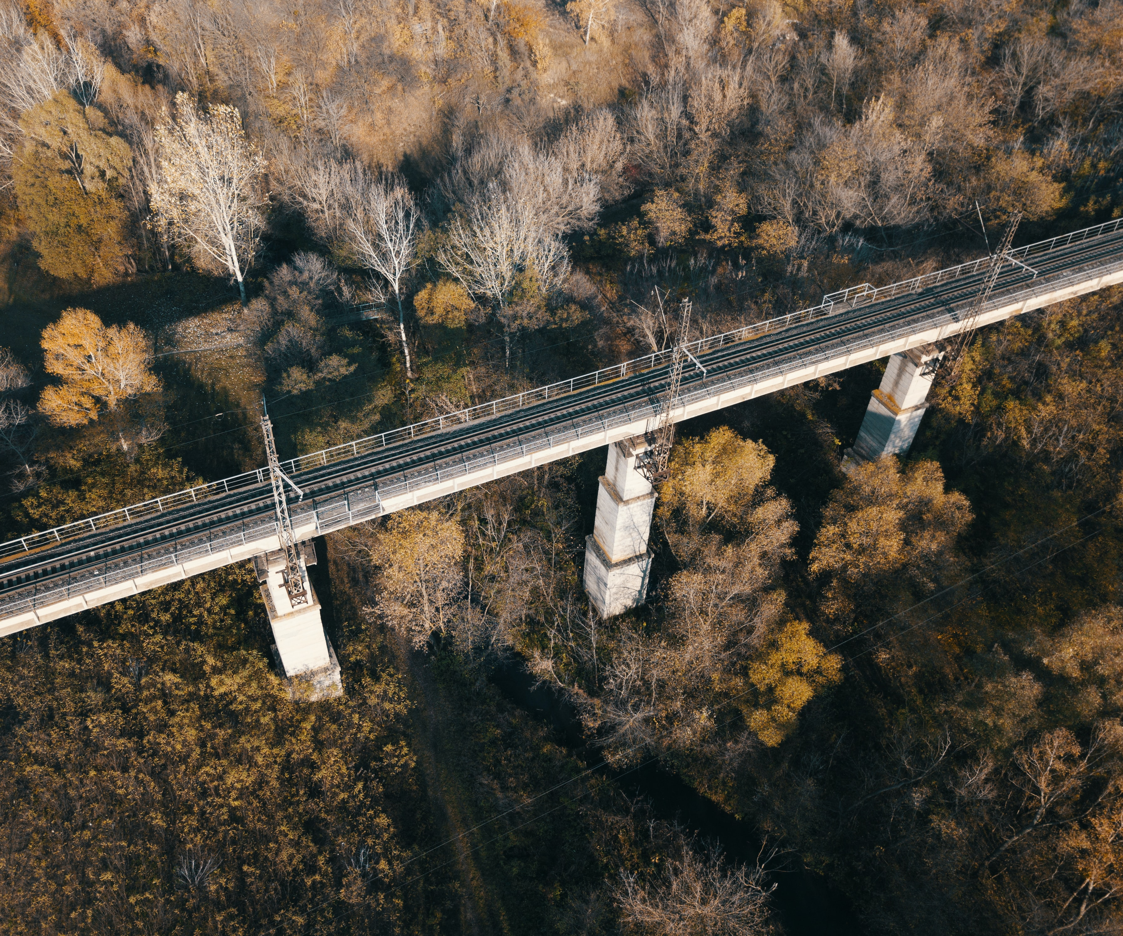 bird's-eye view photography of bridge in between leafed trees