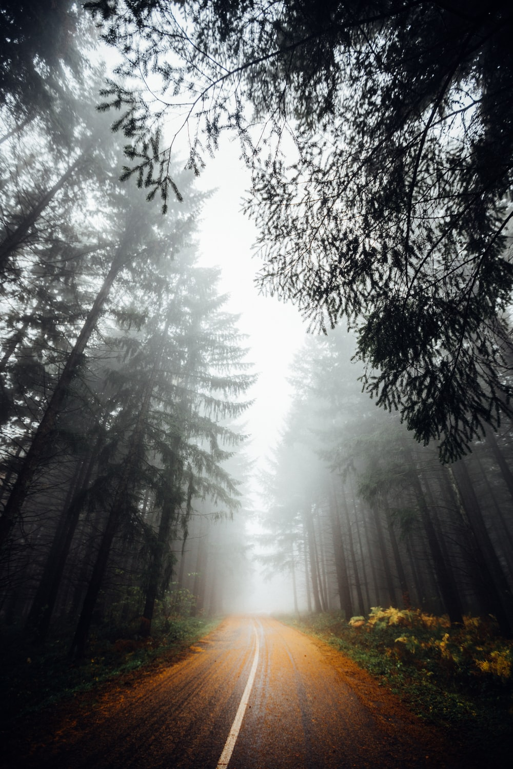 road in woods with fogs overhead at daytime
