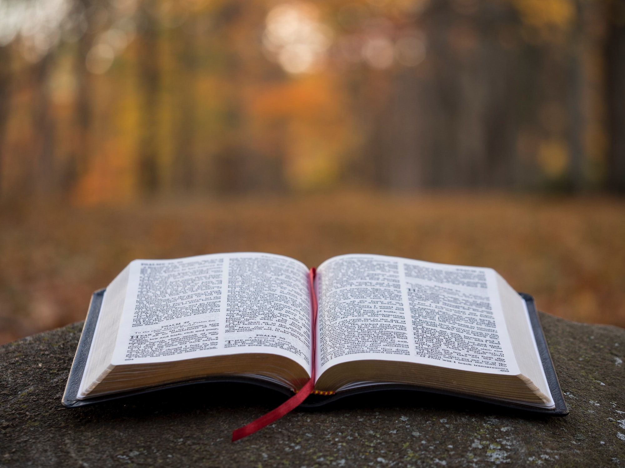 Image of a book splayed open on a rock. The background is a blurry image of an autumn forest