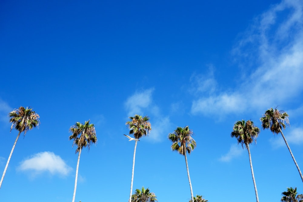 six palm trees under cloudy sky