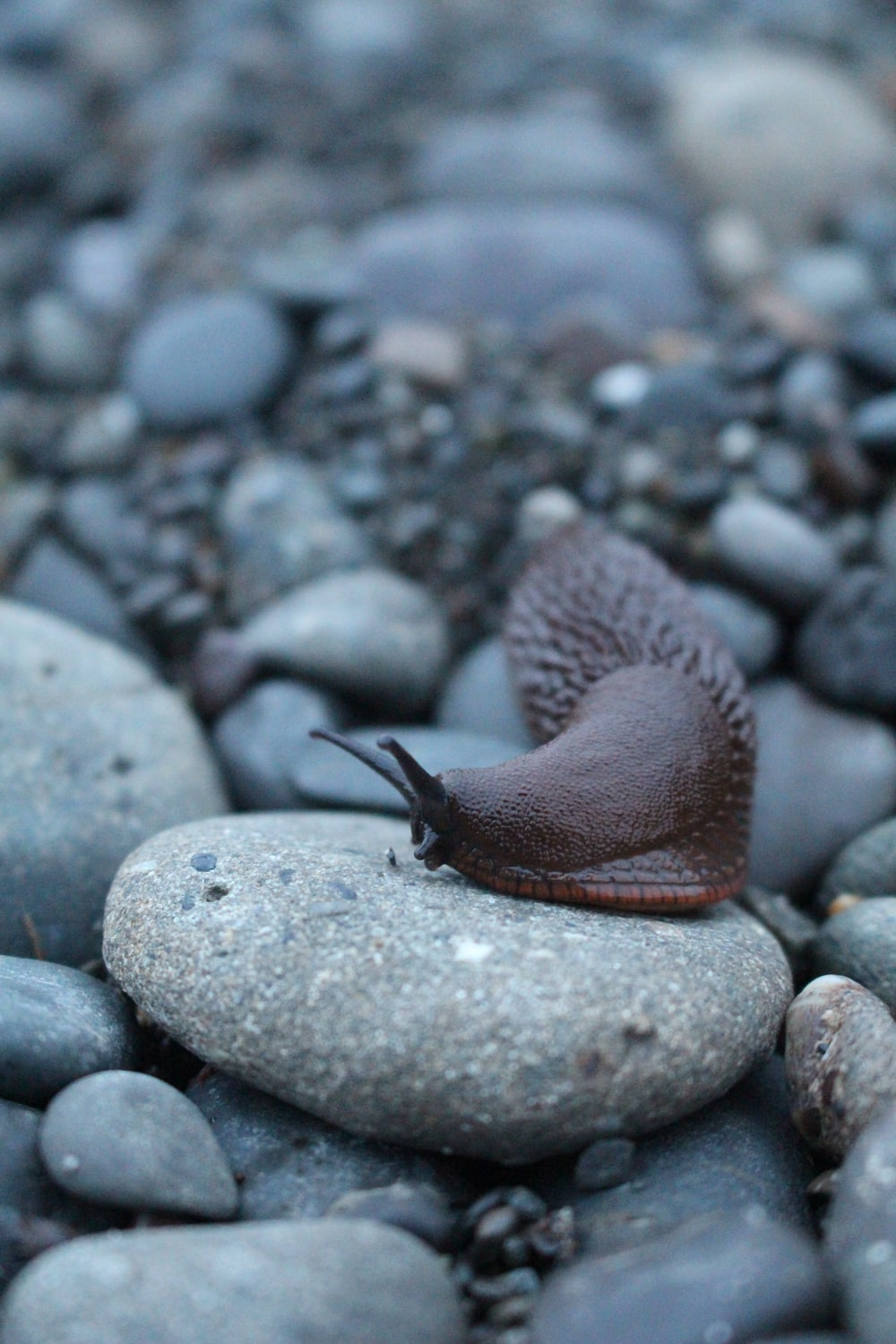 selective focus of snail on stone