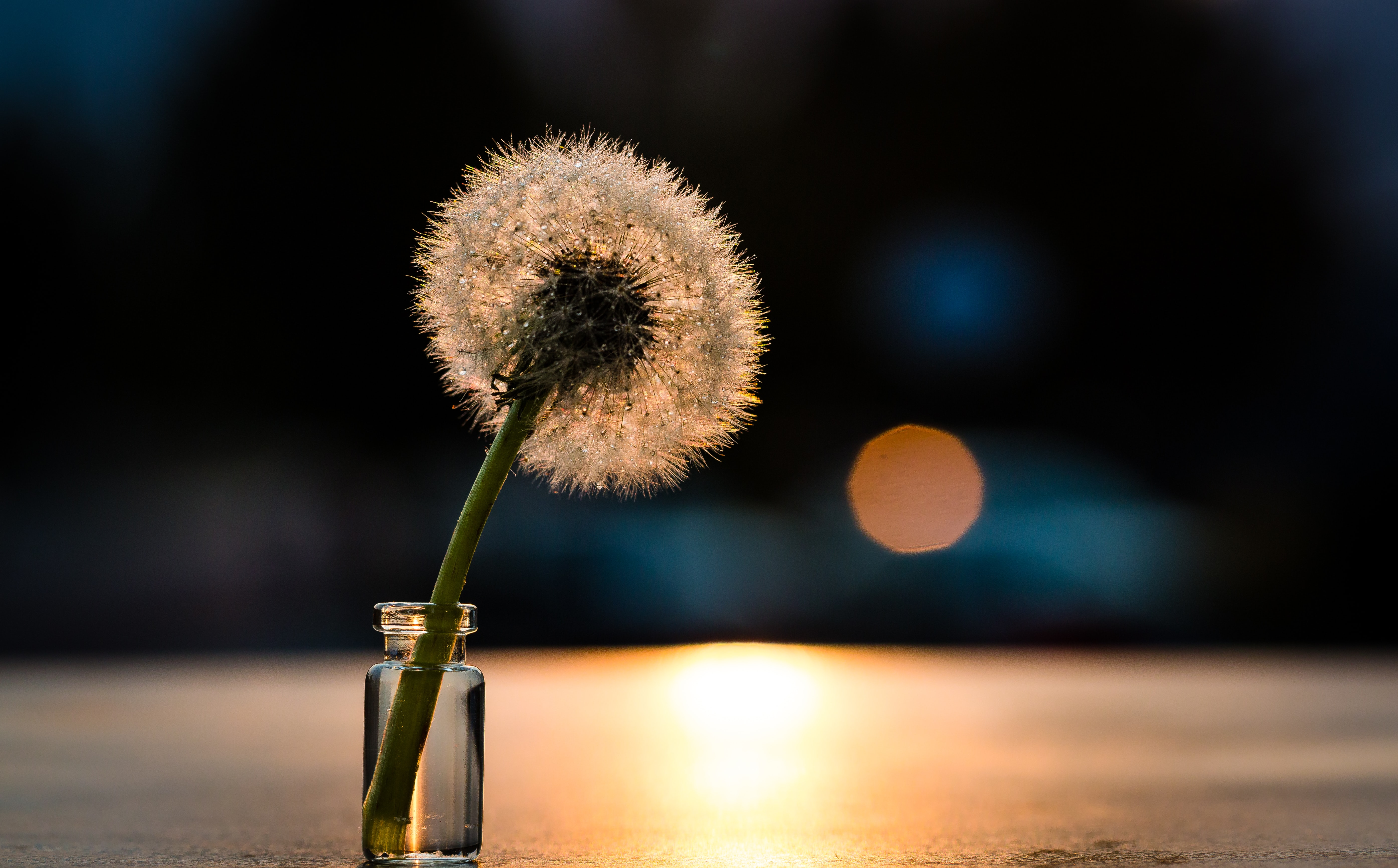withered dandelion in clear glass vial