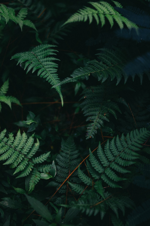 photo of green fern plants