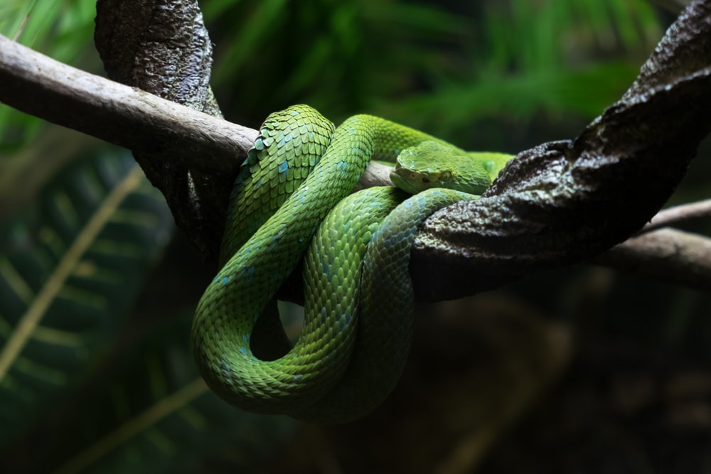 shallow focus photography of green snake in tree branch