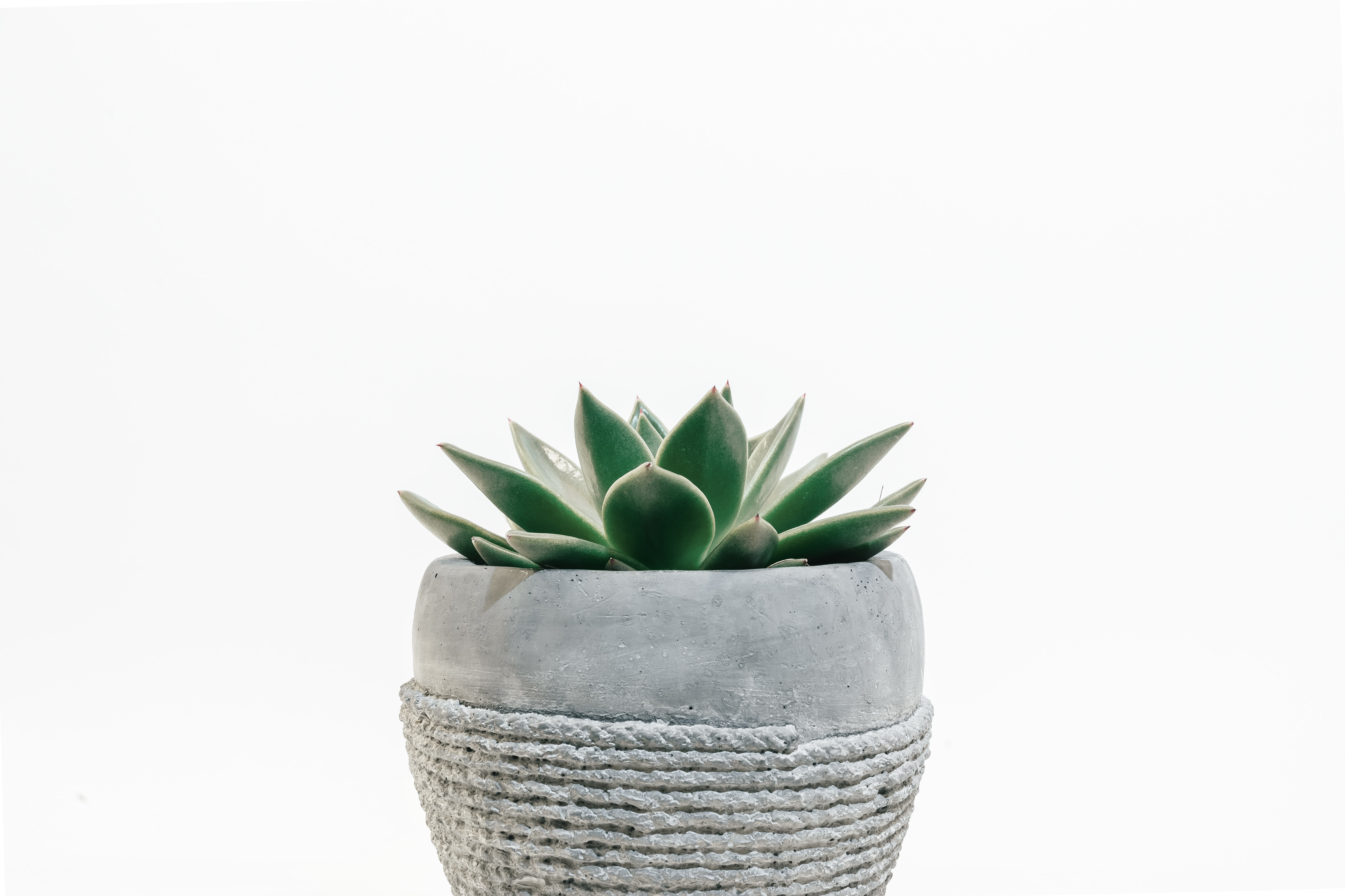 green succulent plant in gray pot