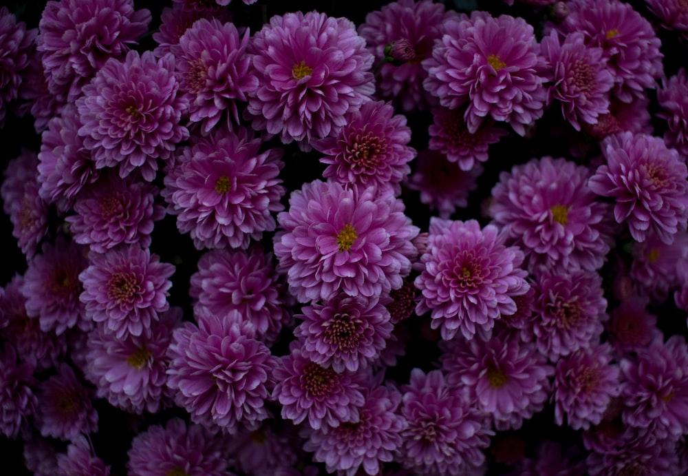 lots of pink flowers