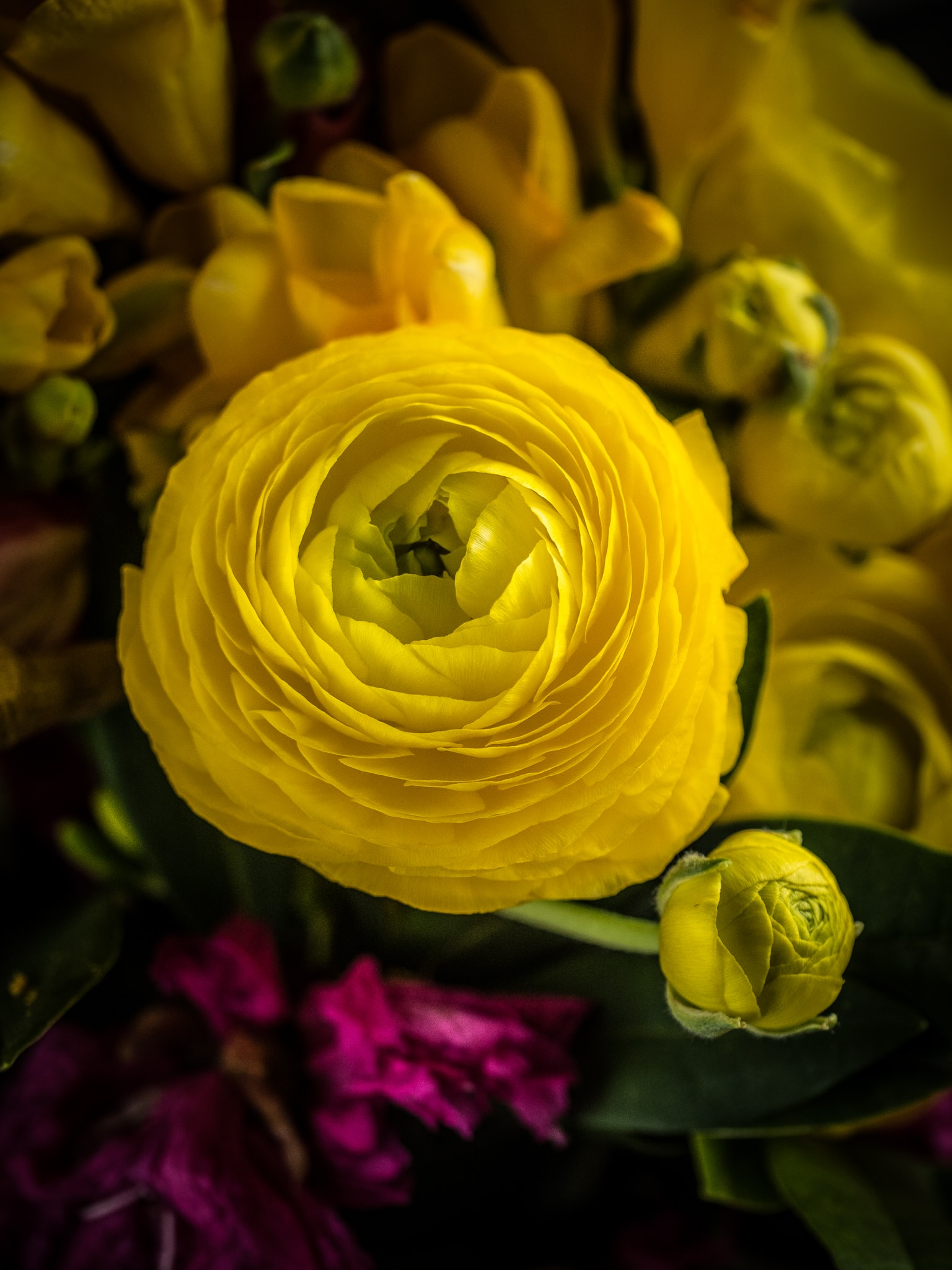 close-up photography of yellow petaled flower