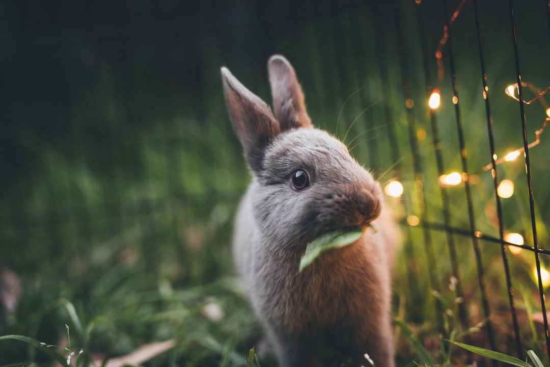 wildlife photography of gray rabbit