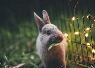wildlife photography of gray rabbit