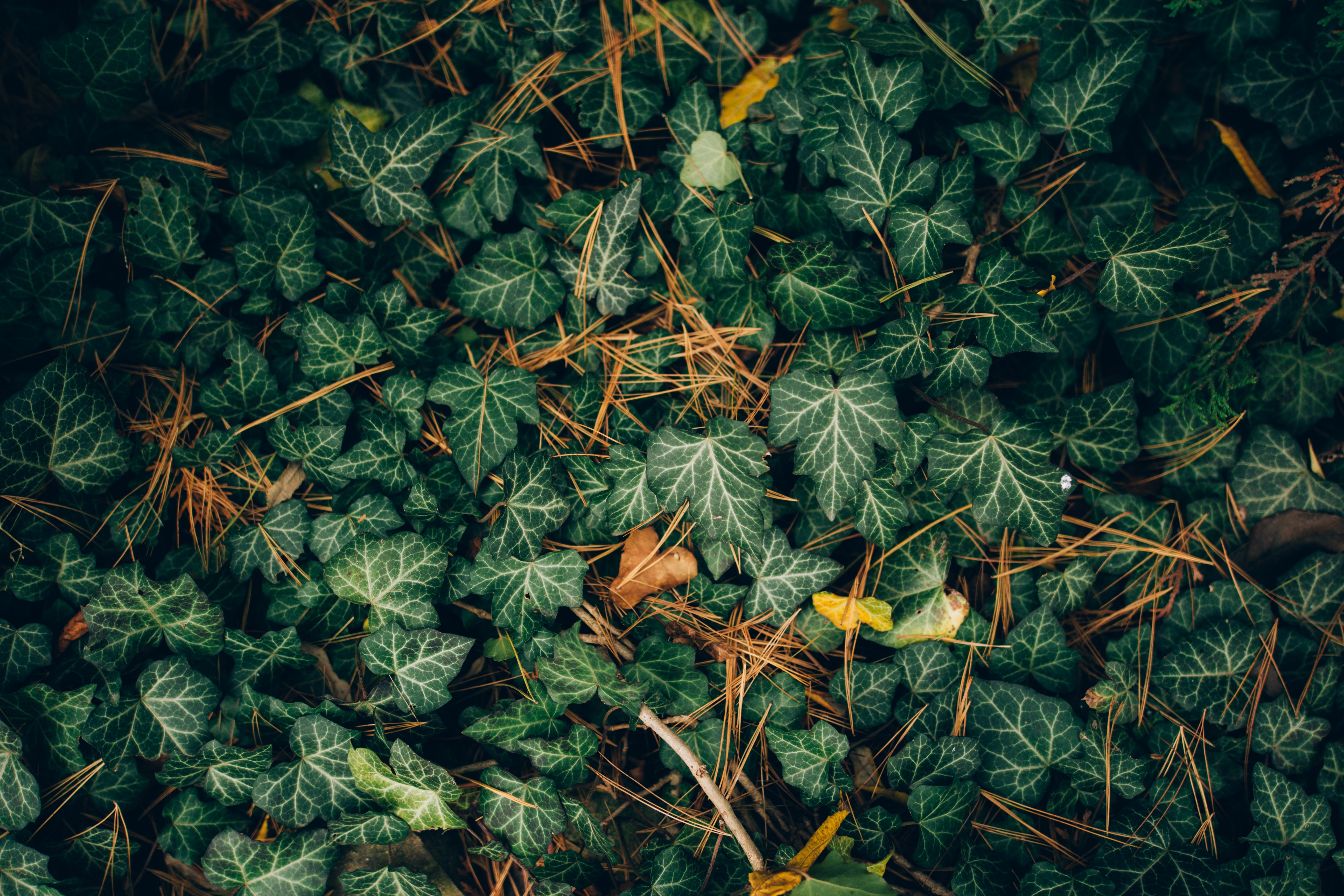 low-angle photography of green leafed plants