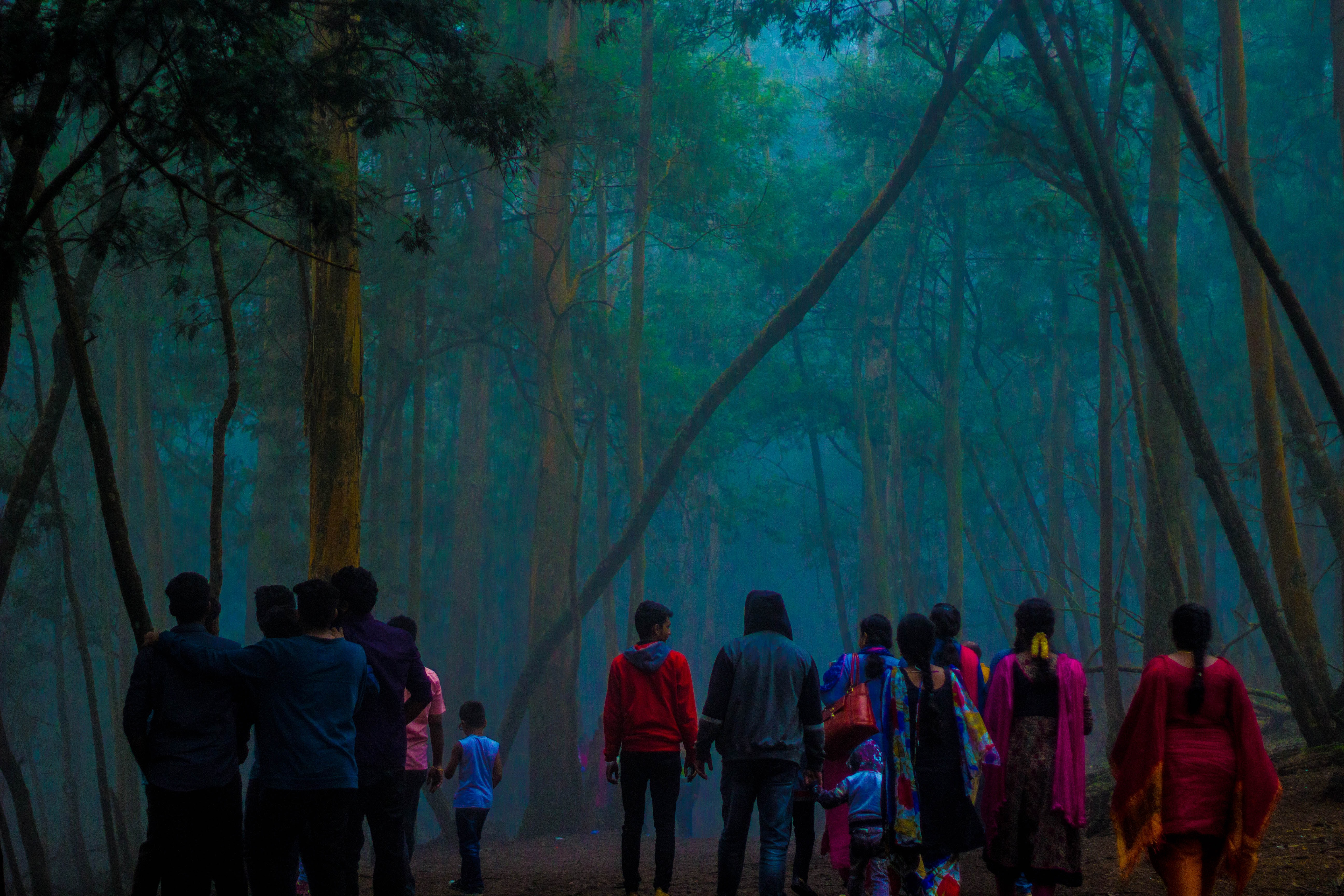 people walking in forest