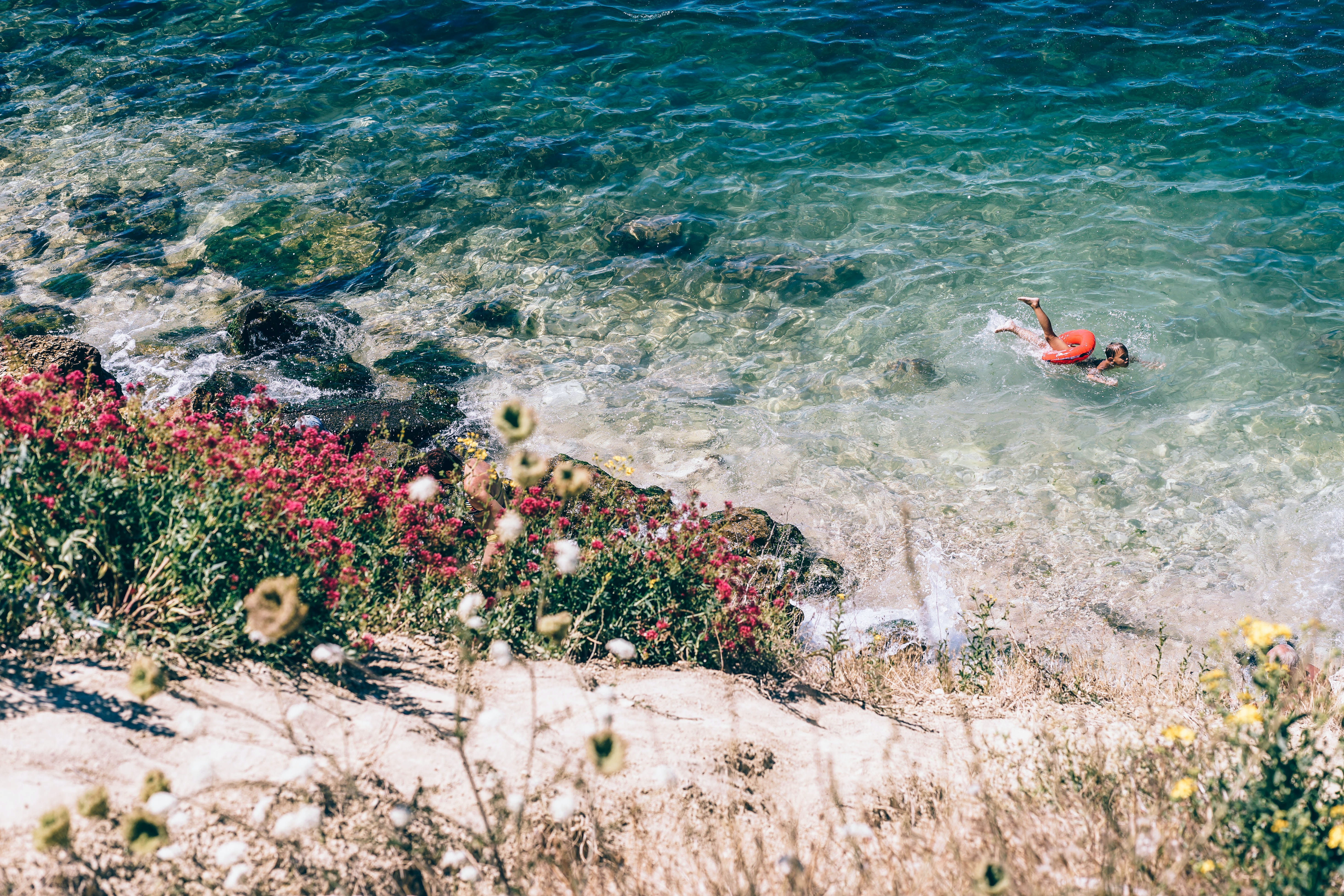 landscape photography of sea and multicolored flowers