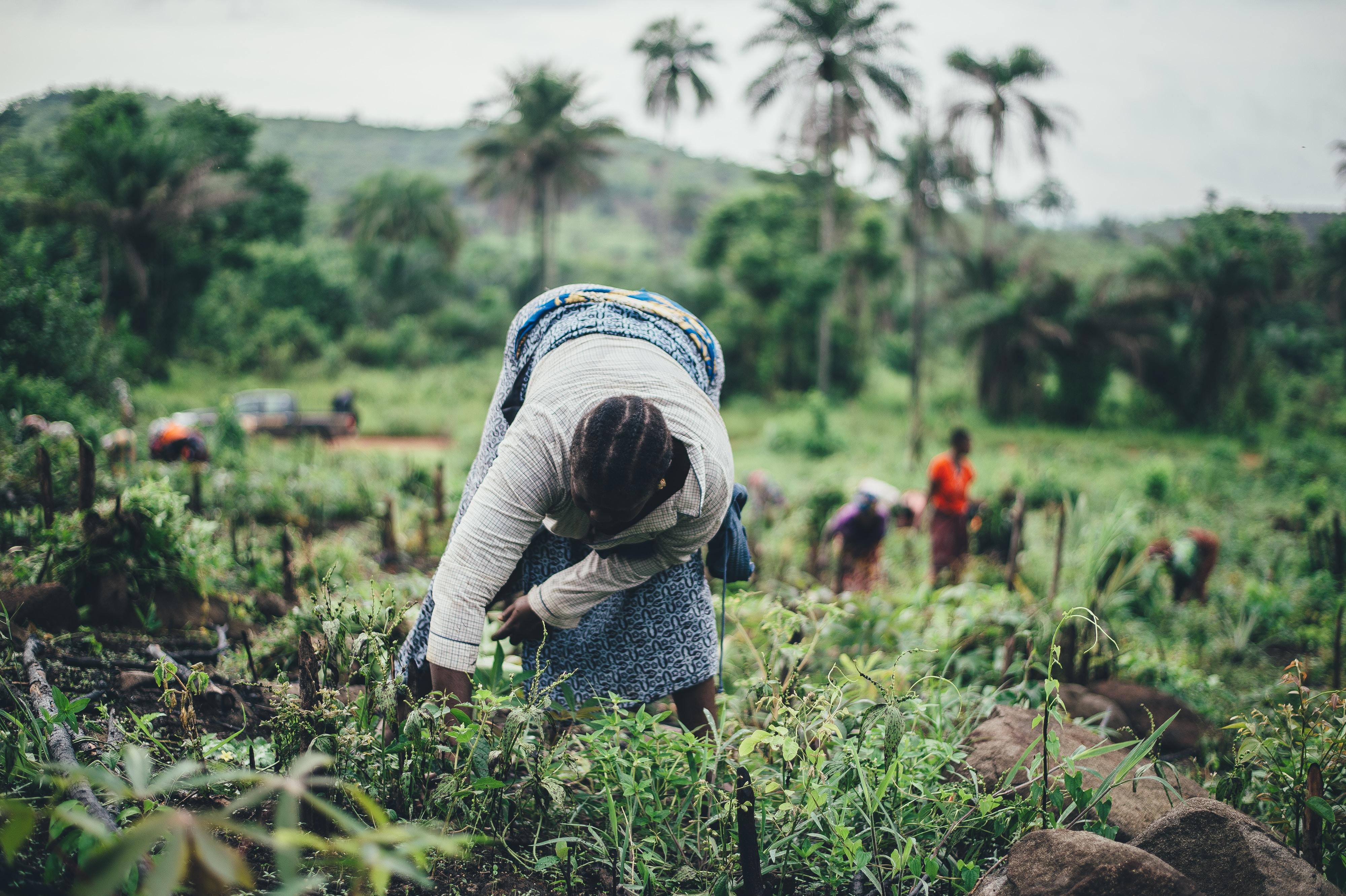 woman planting during daytime