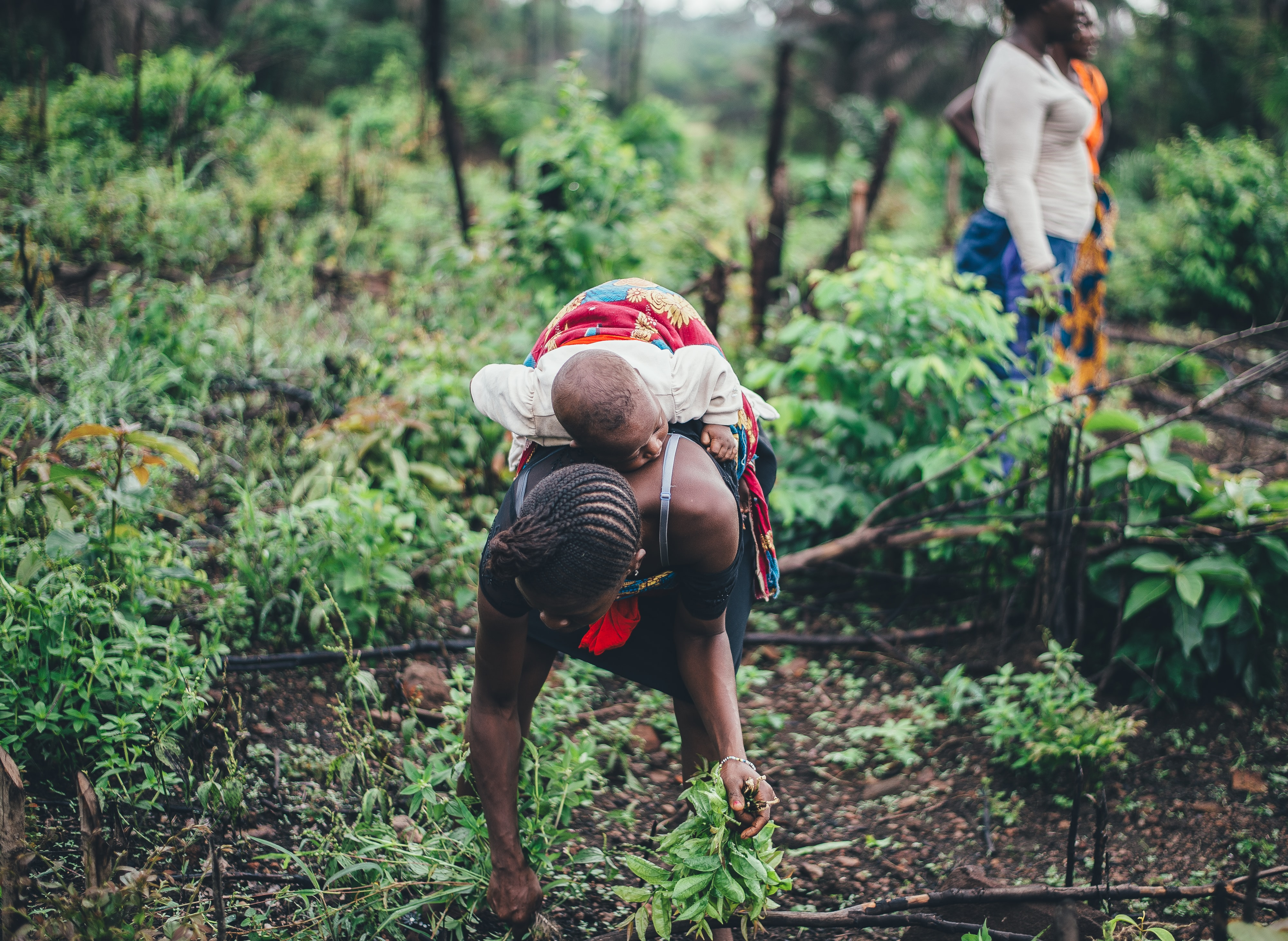 woman carrying a kid while picking plants
