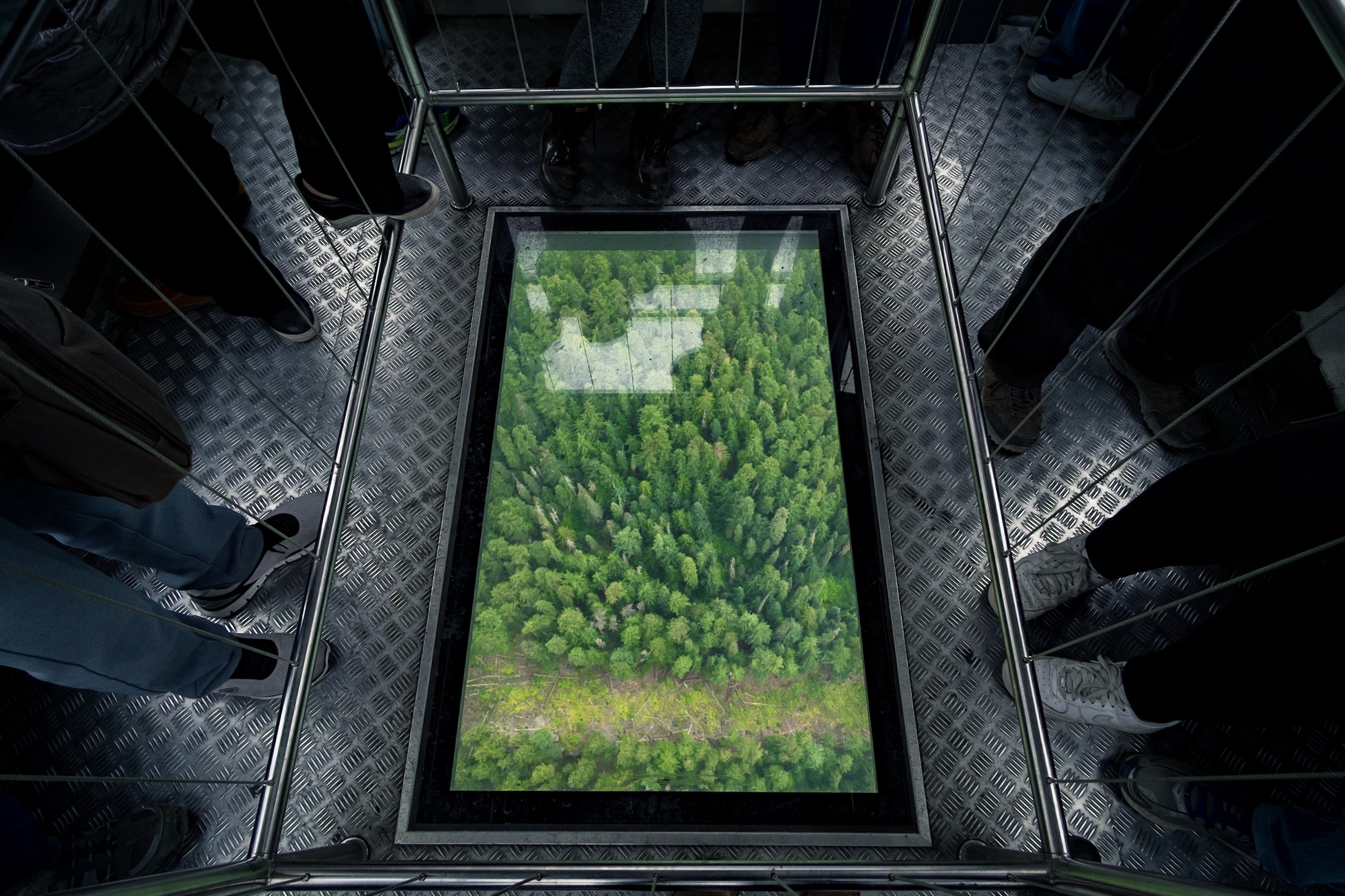 aerial photography of forest painting surrounded by people