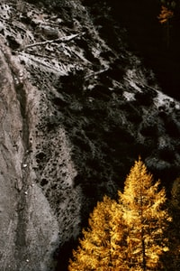 brown leafed tree beside mountain