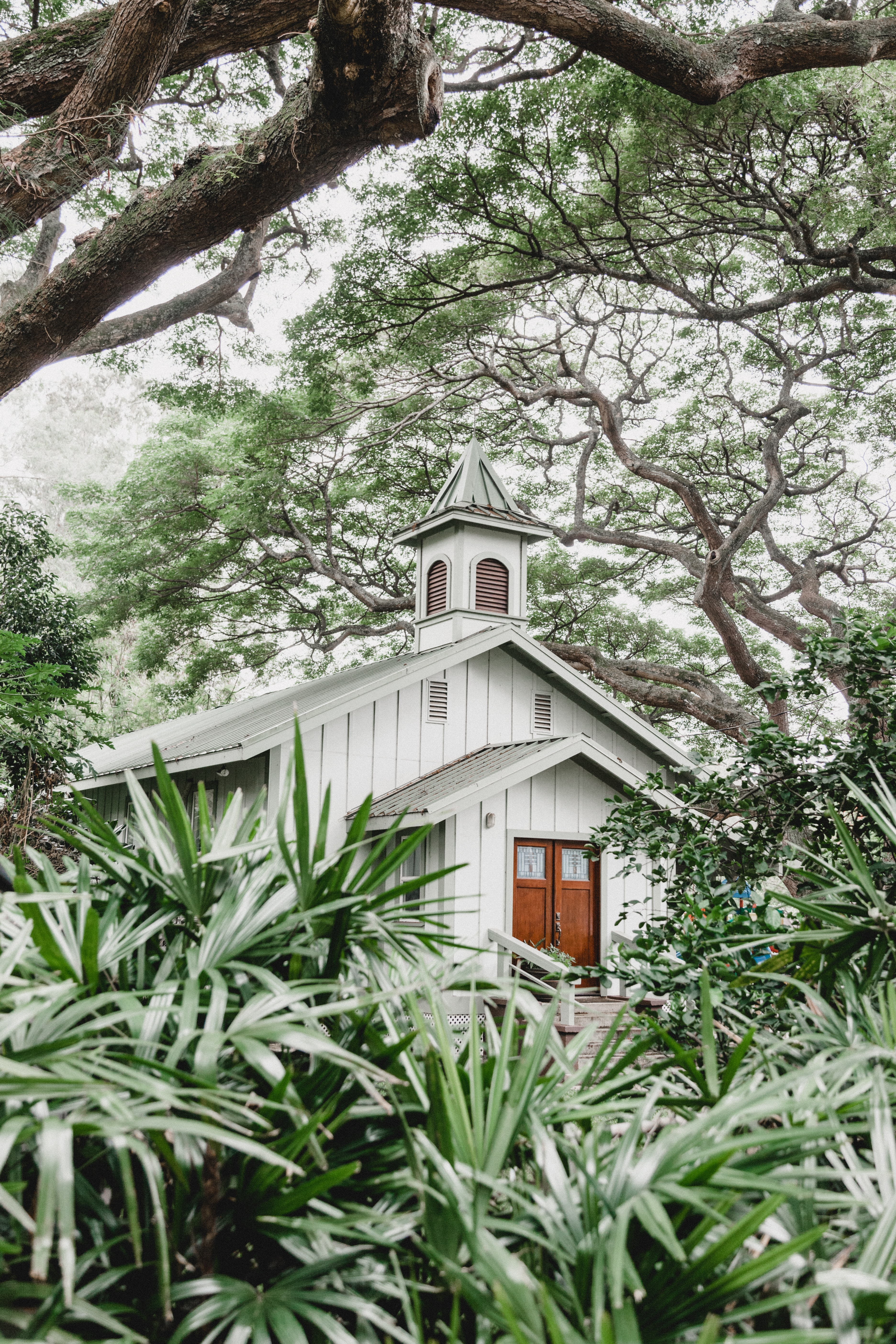white wooden church near trees