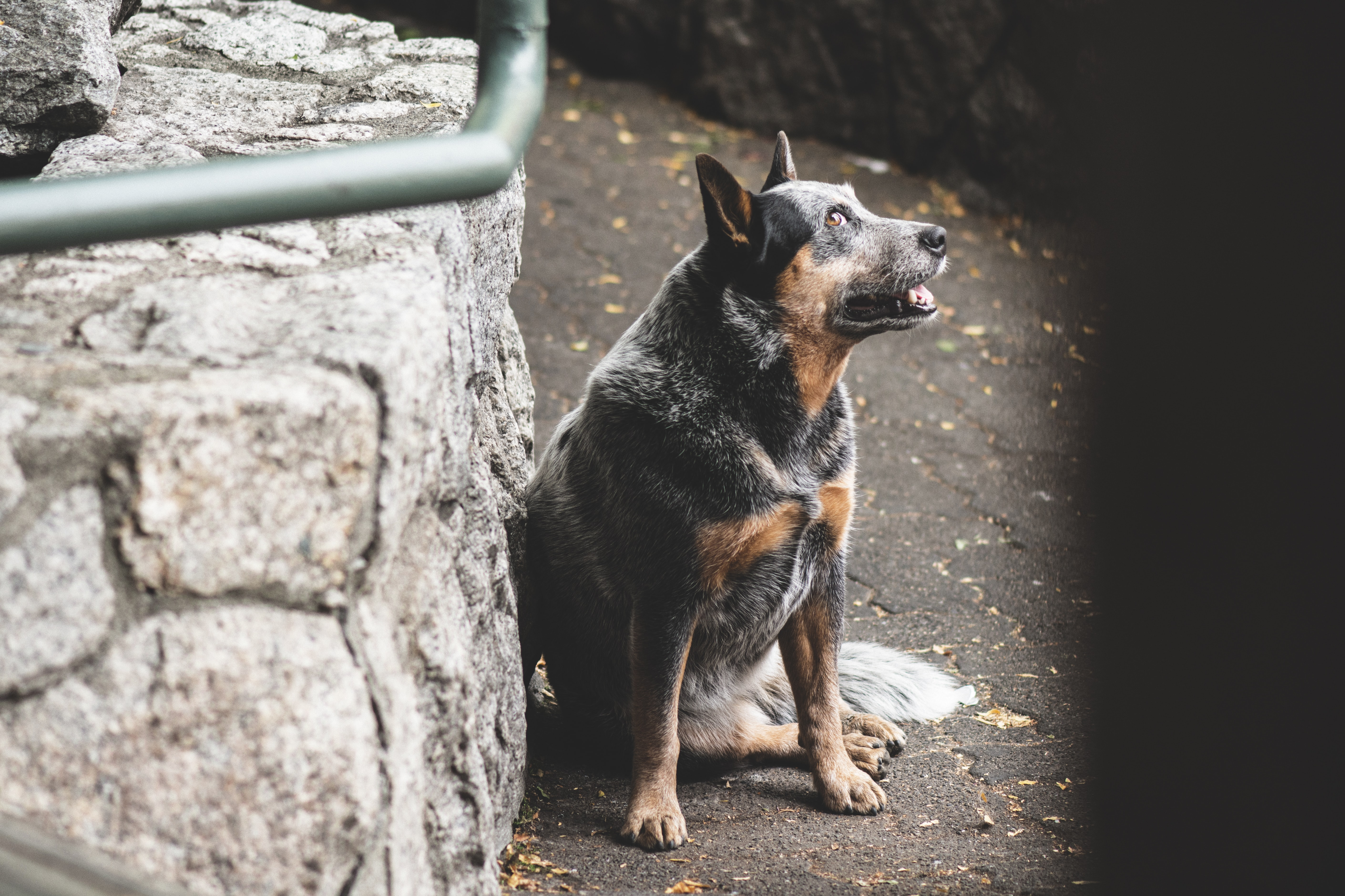photo of black and tan dog beside pavement