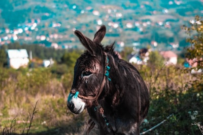depth photography of brown donkey bosnia and herzegovina teams background