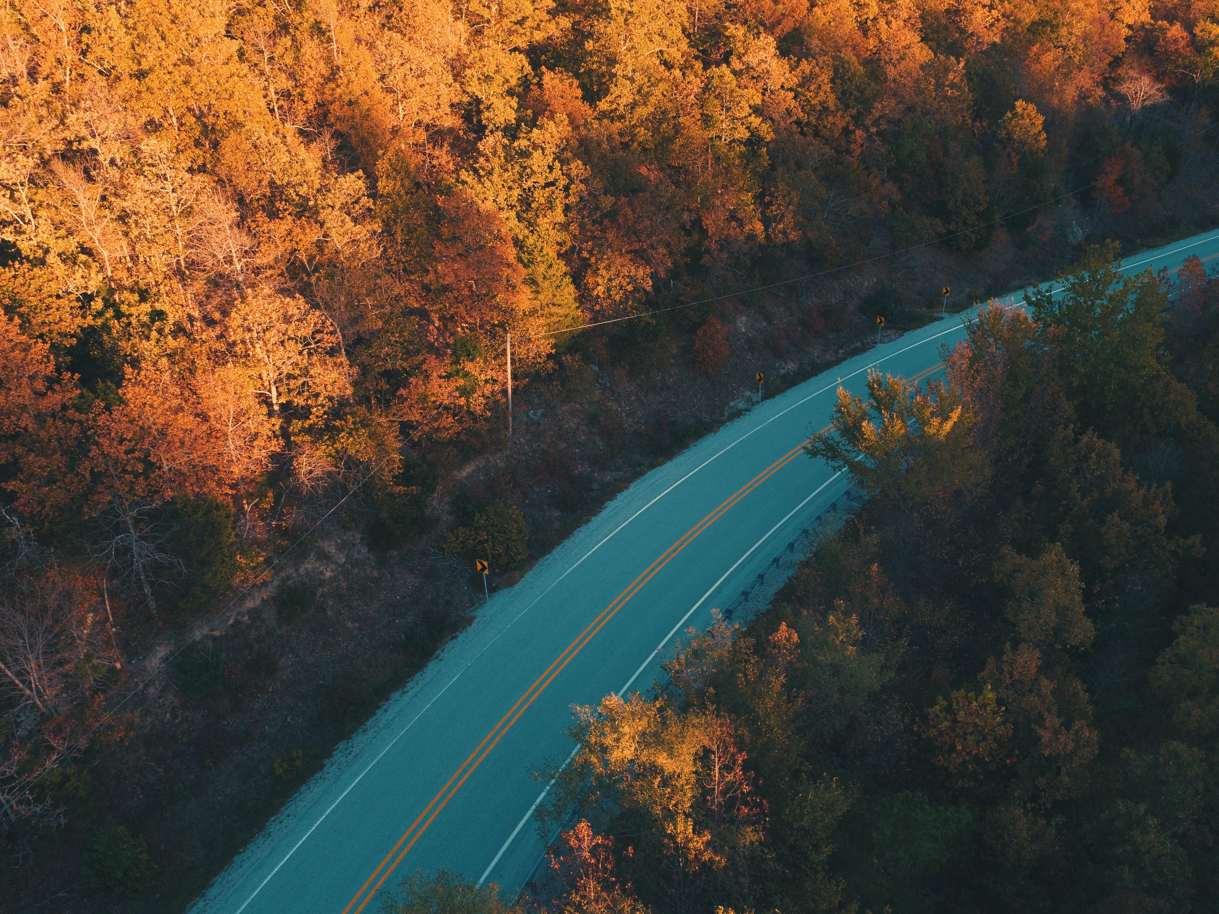 bird's-eye view photography of asphalt road between brown trees