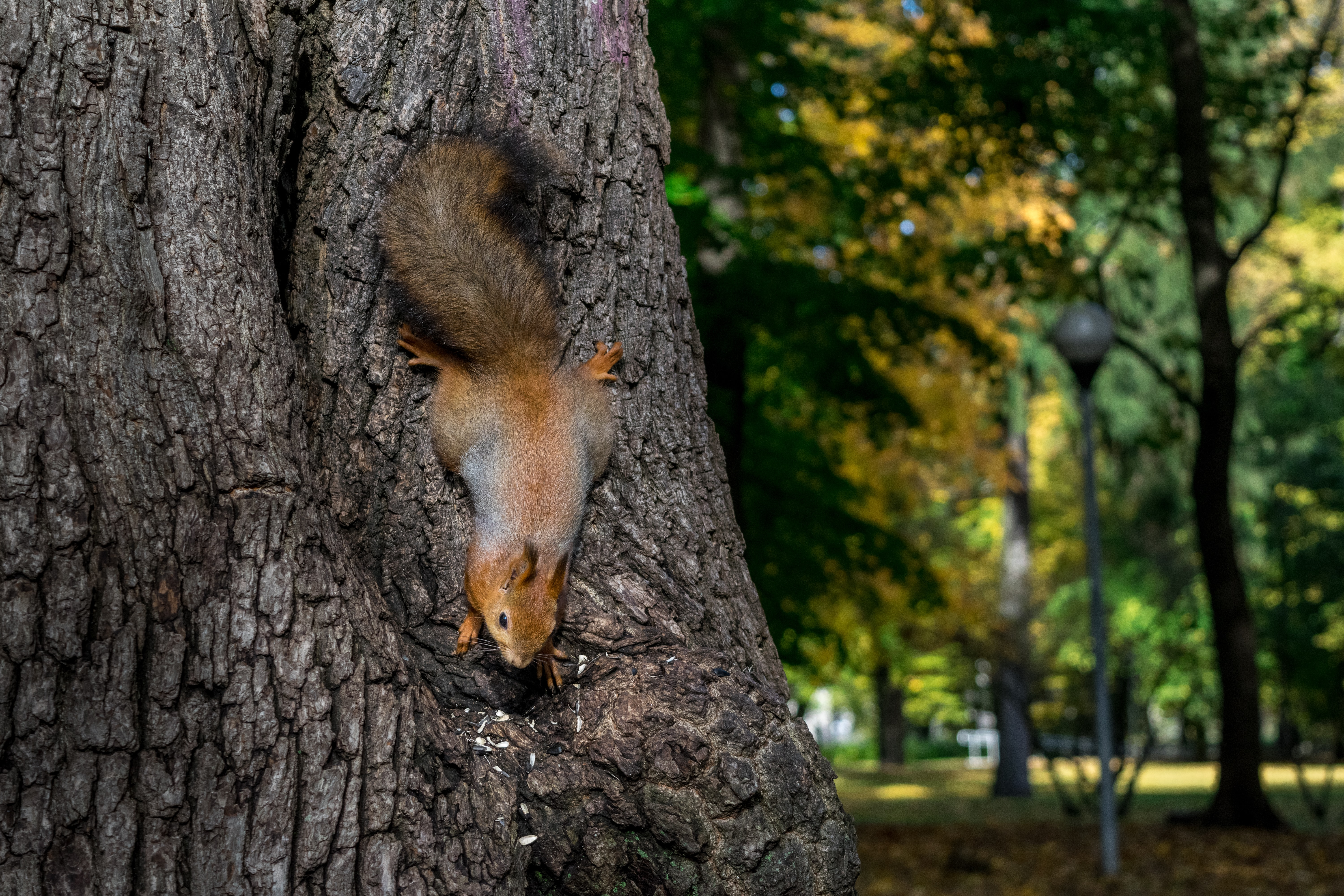 brown and gray squirrel on gray tree trunk at daytime