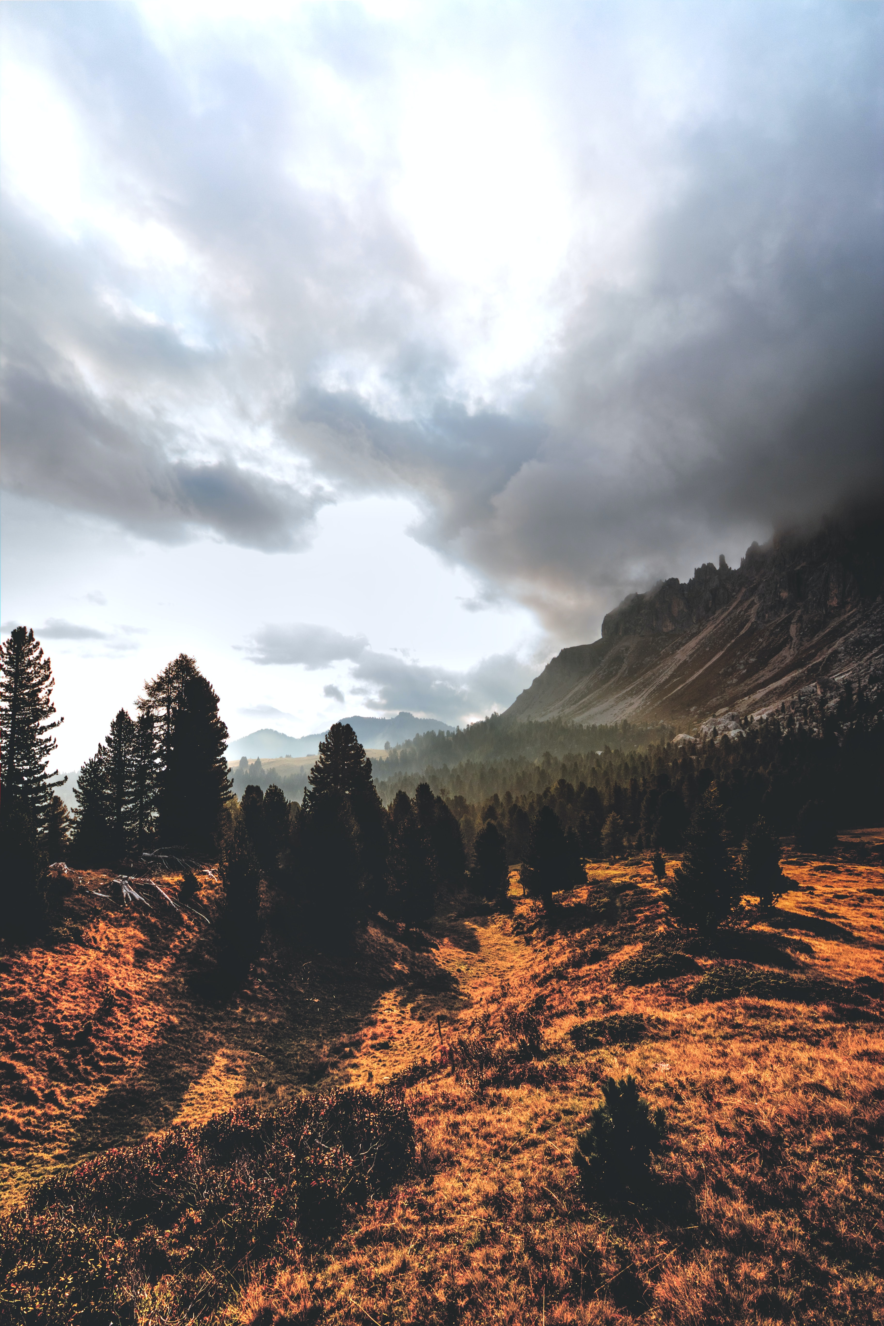 landscape photograph of trees and mountain ranges