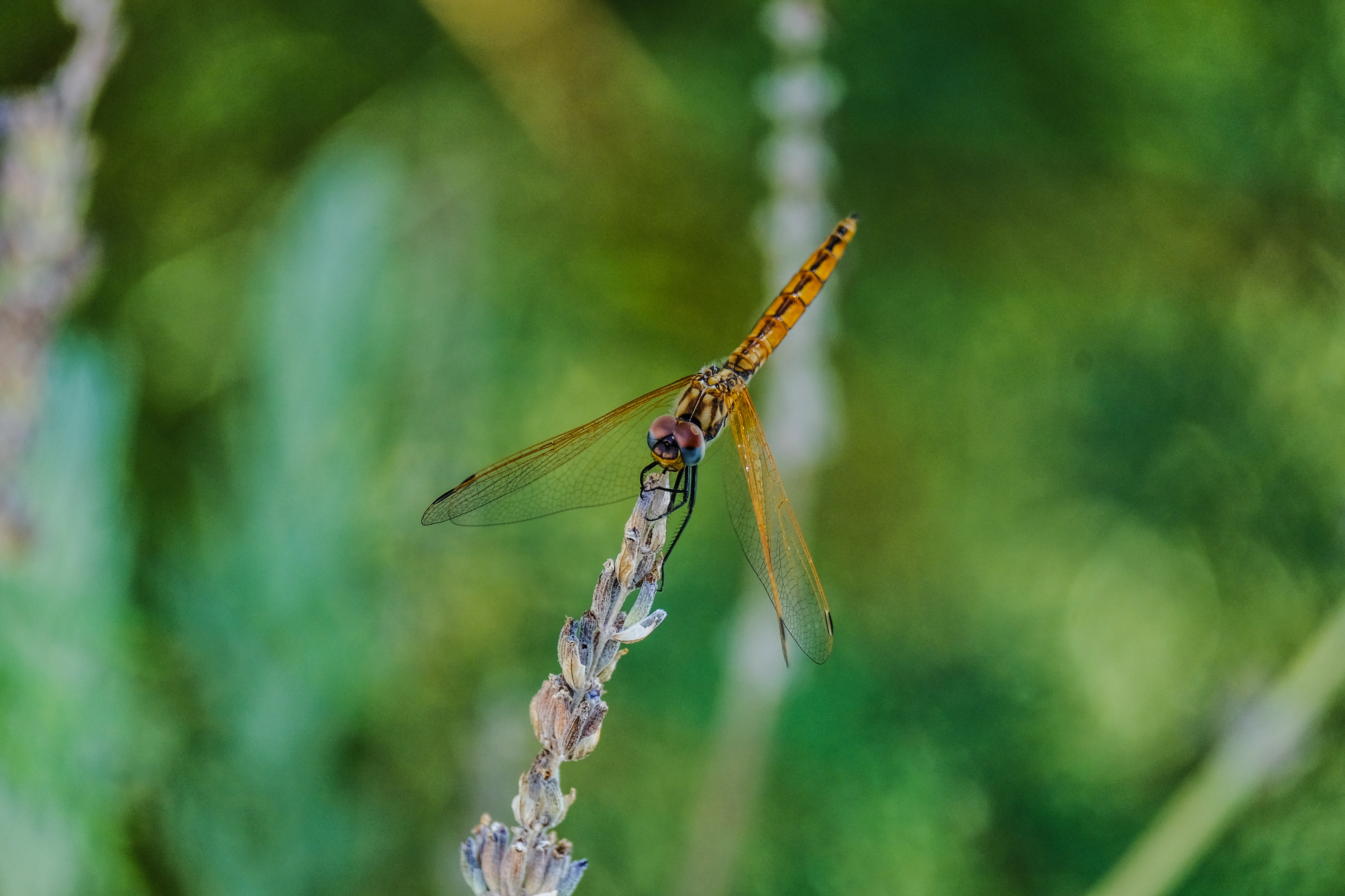selective focus photography of brown dragonfly on flower