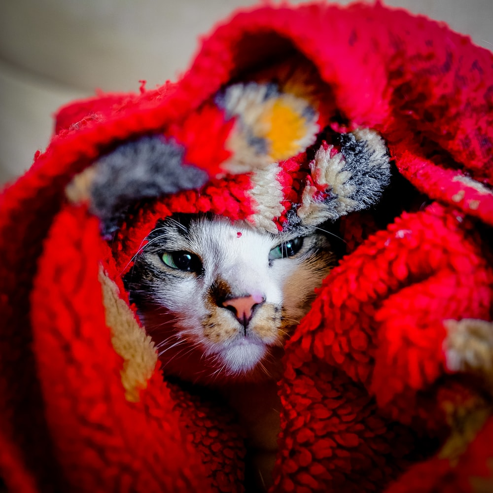 shallow focus photography of cat under textile
