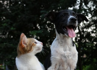 shallow focus photography of dog and cat