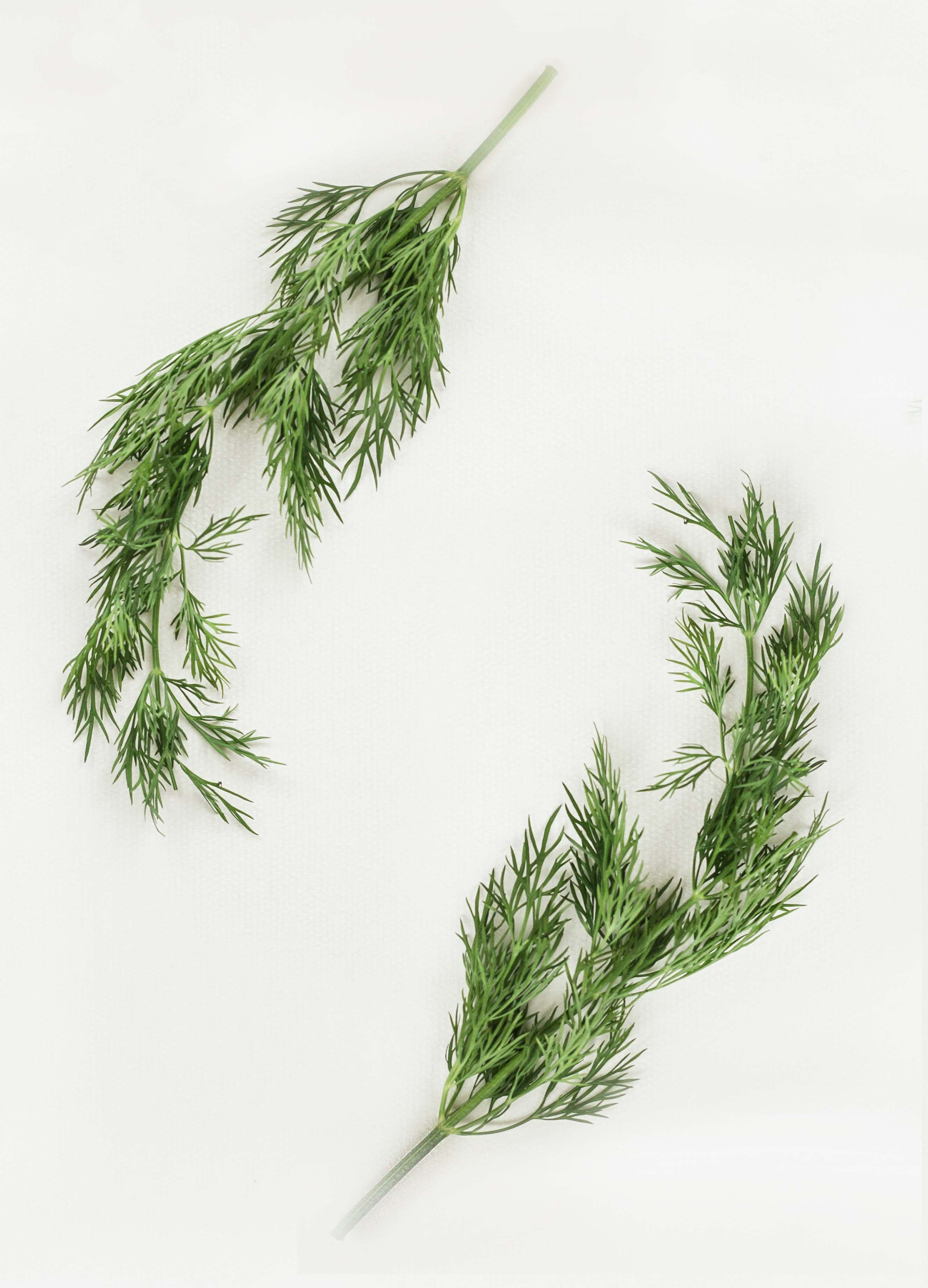 green leafed plants on white background