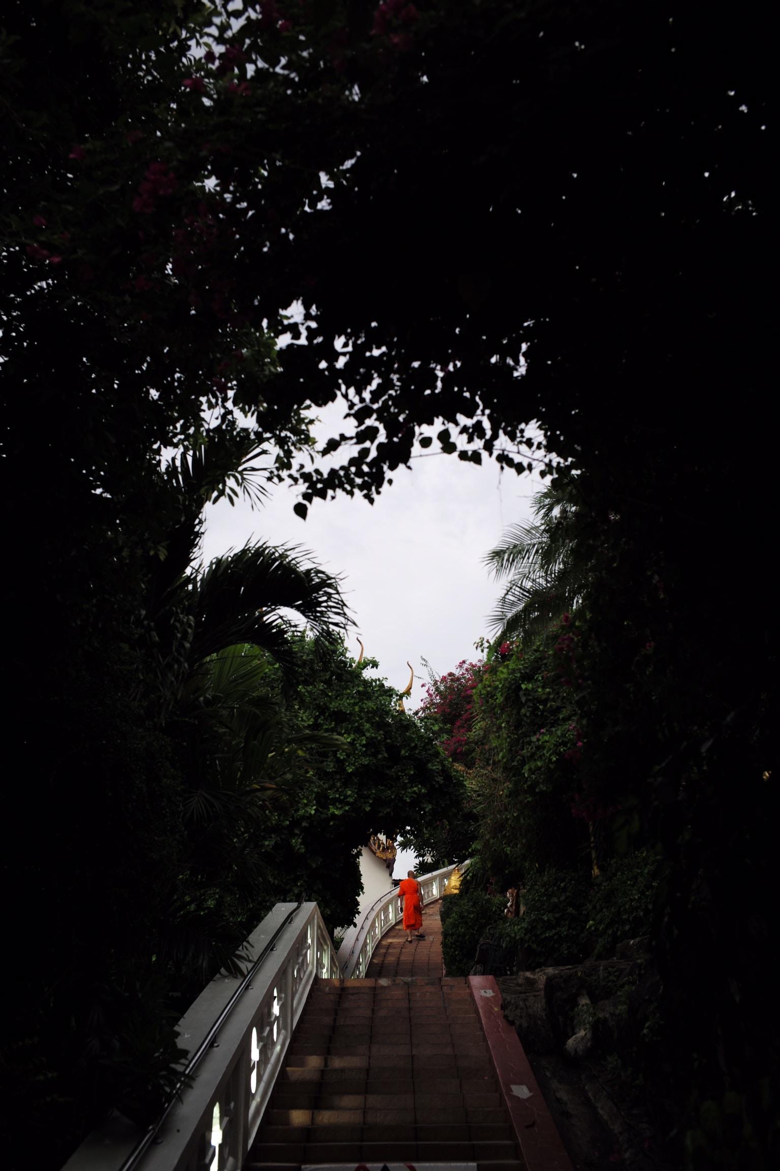 person walking on bridge in between trees at daytime