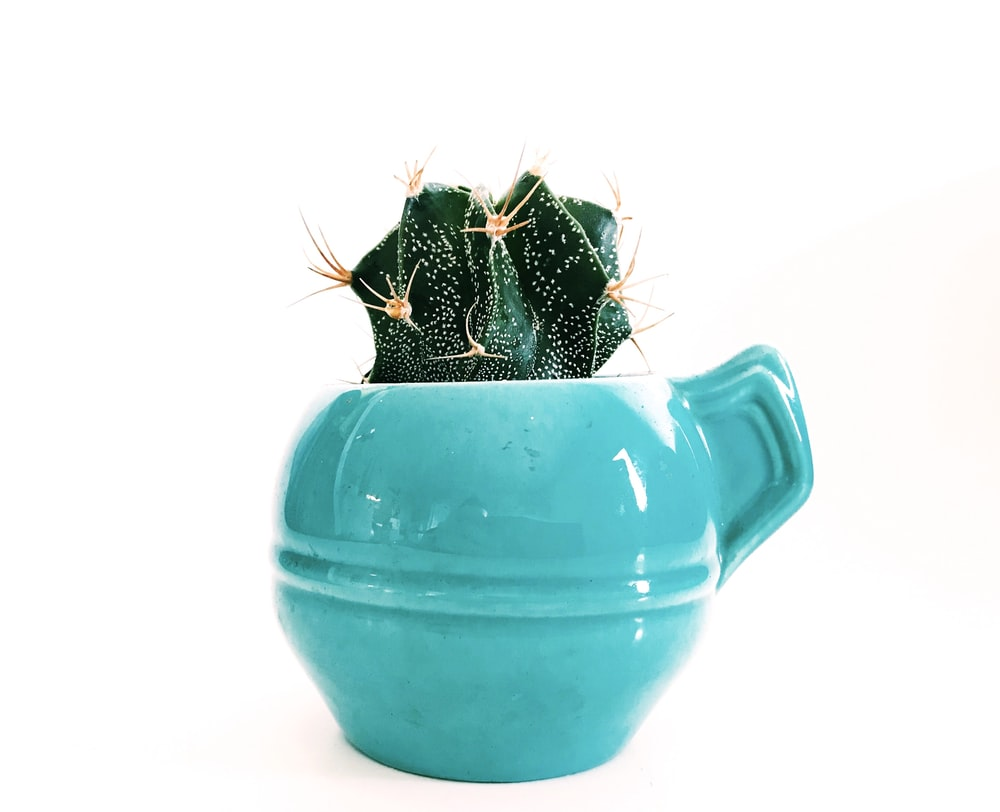 green succulent on blue ceramic pot