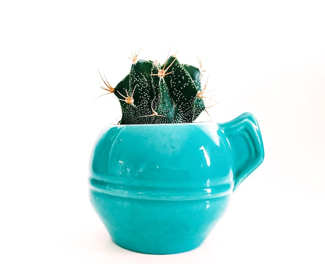 Reese Cactus
