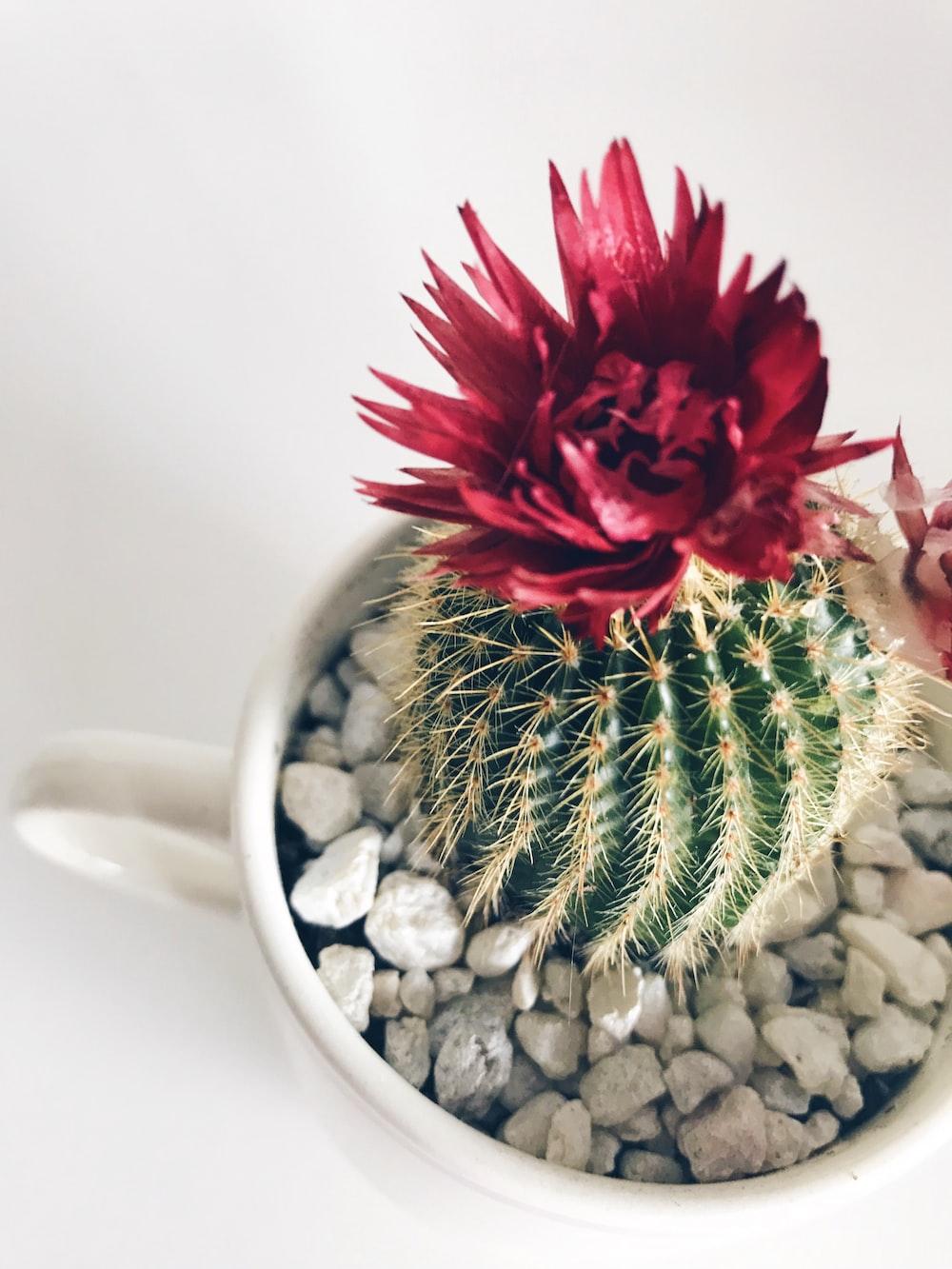 red flower on white ceramic mug