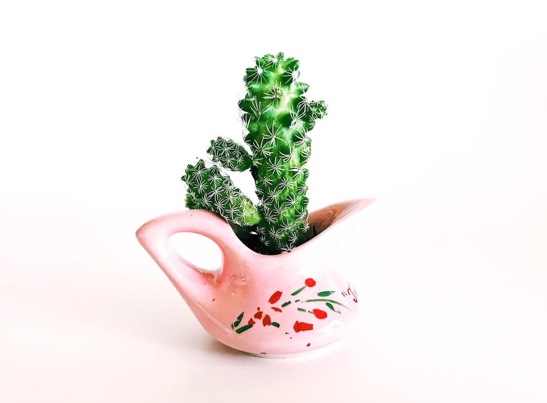 Zella Cactus Mini
