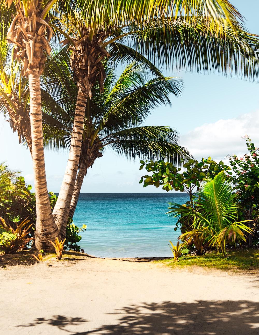 coconut tree on beach
