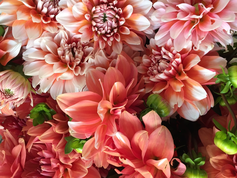 pink-and-white floral decor