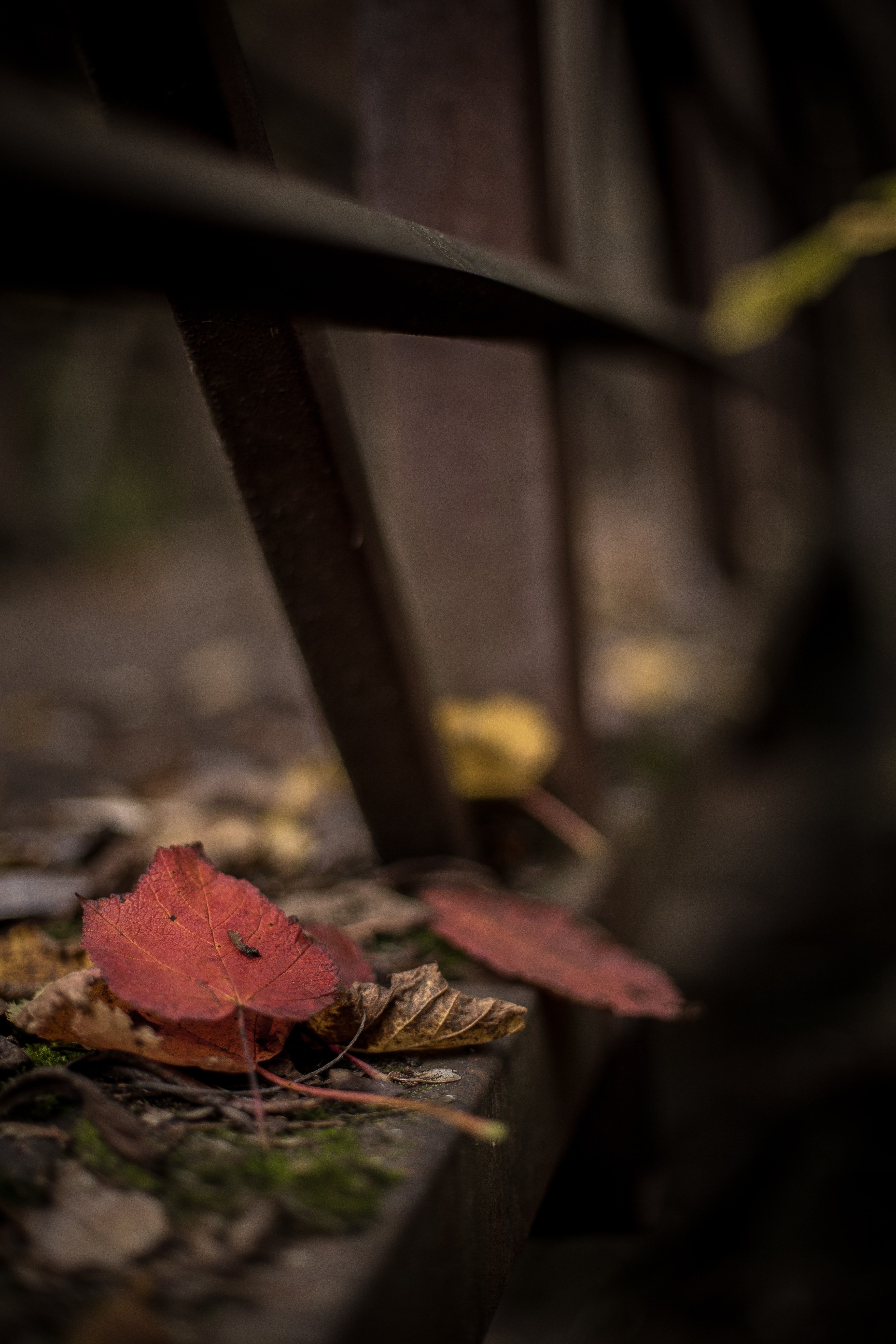 selective focus photography of brown leaf near gray metal rails