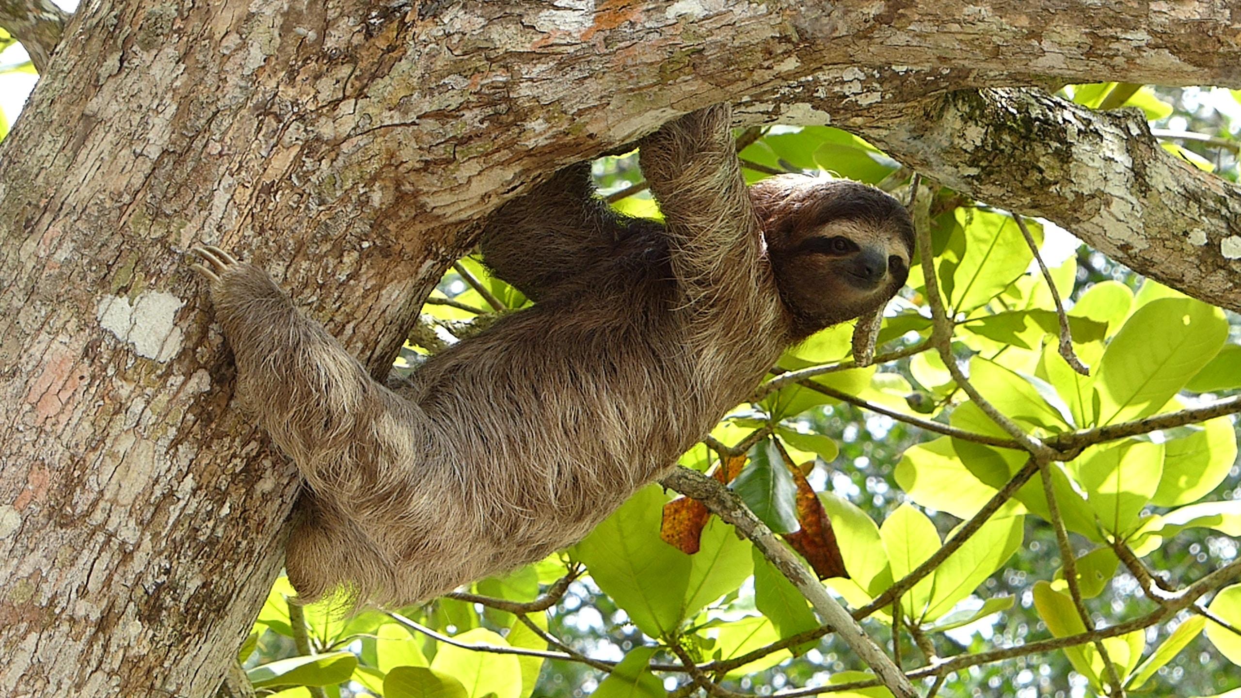 brown animal hanging on tree