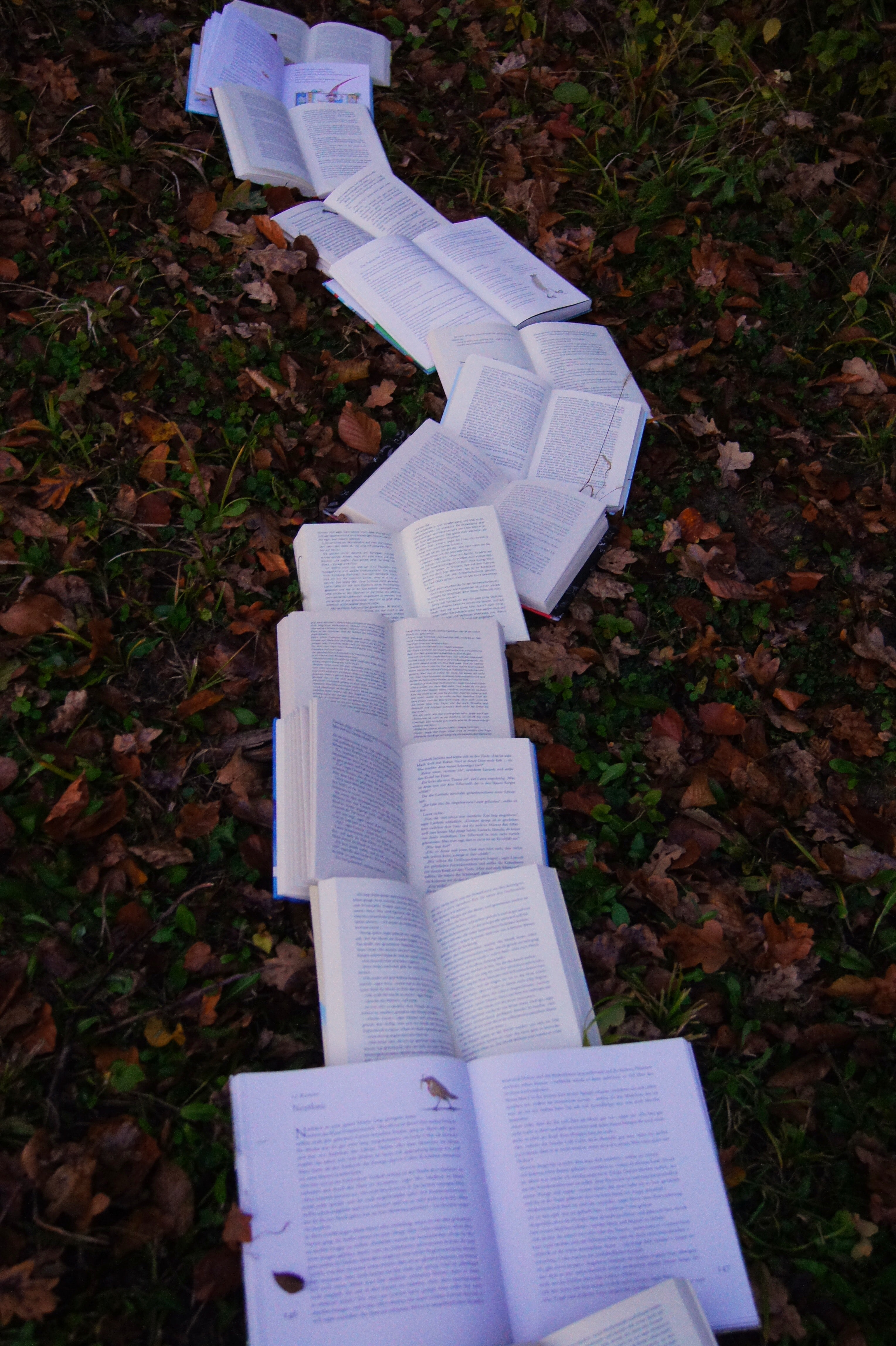 Books laid open in the grass forming a path