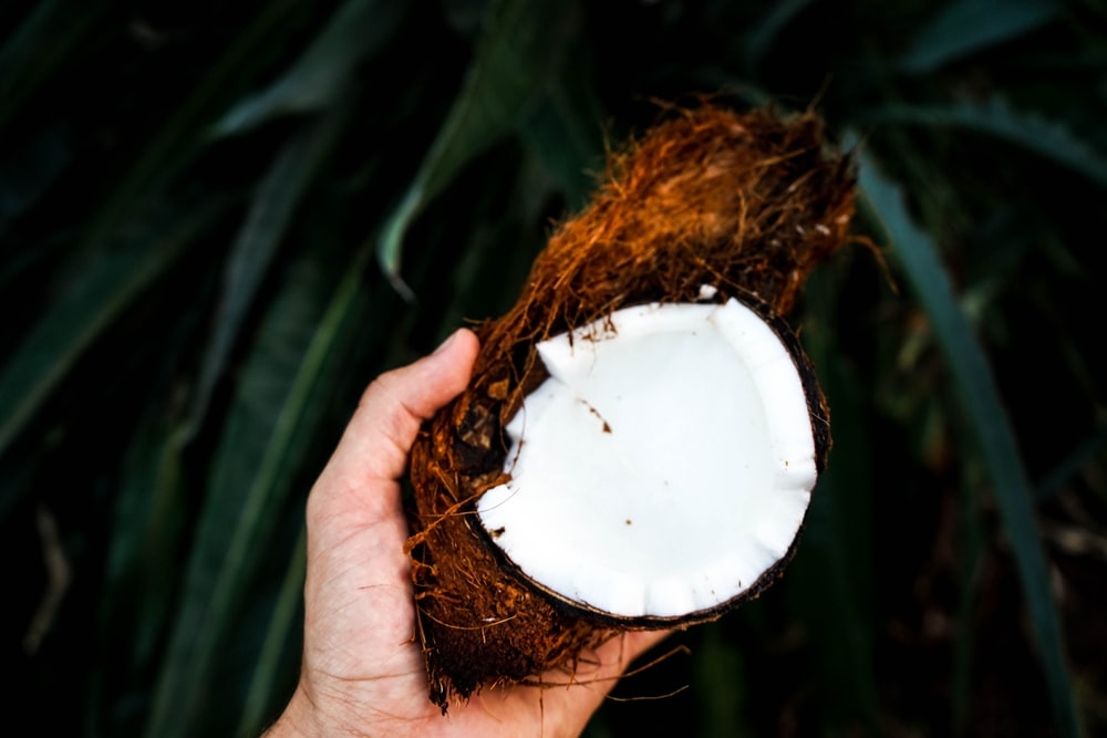 person holding coconut husk