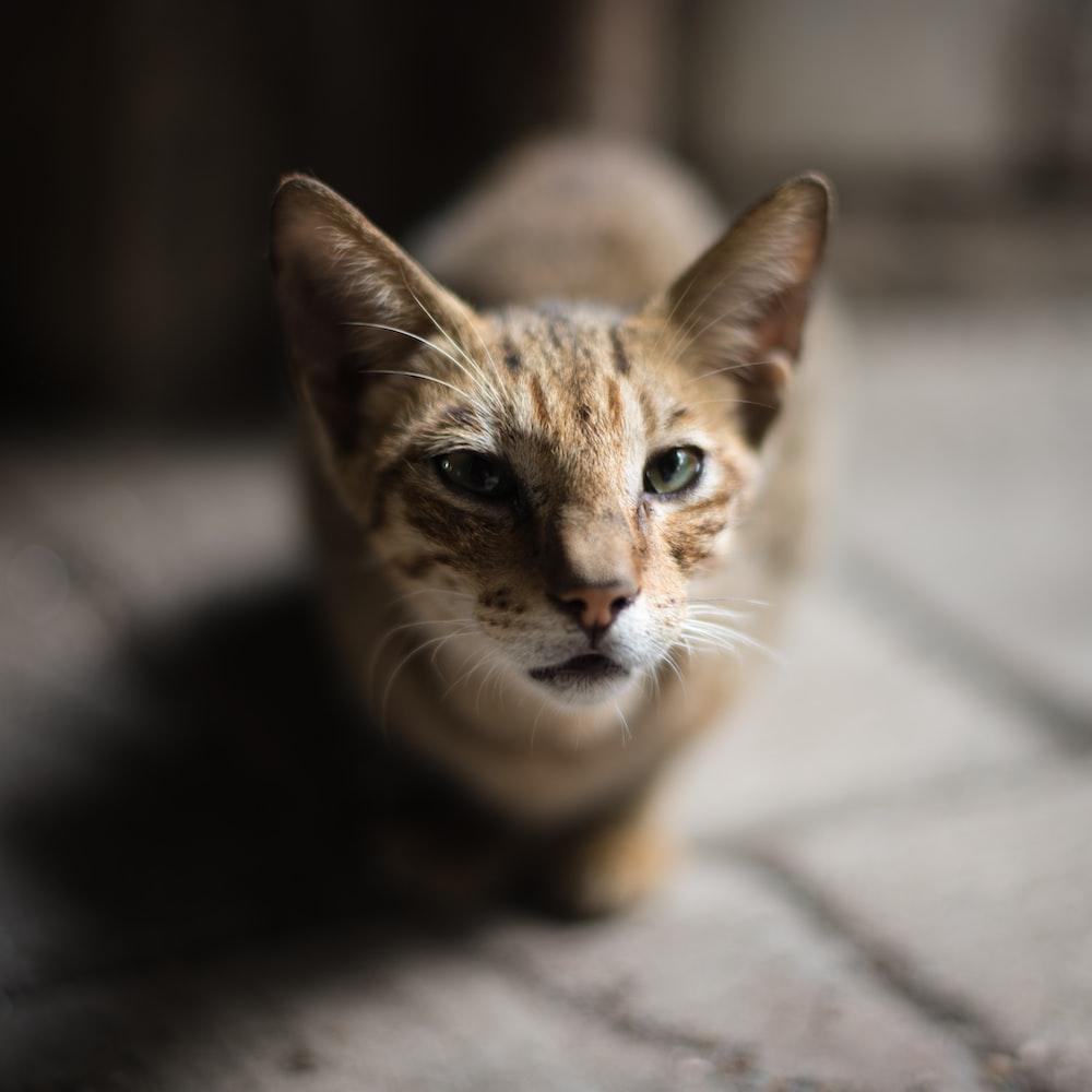 shallow focus photograpy of brown cat