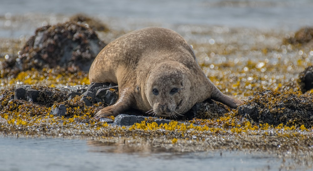 shallow focus photography of brown seal lying on stone