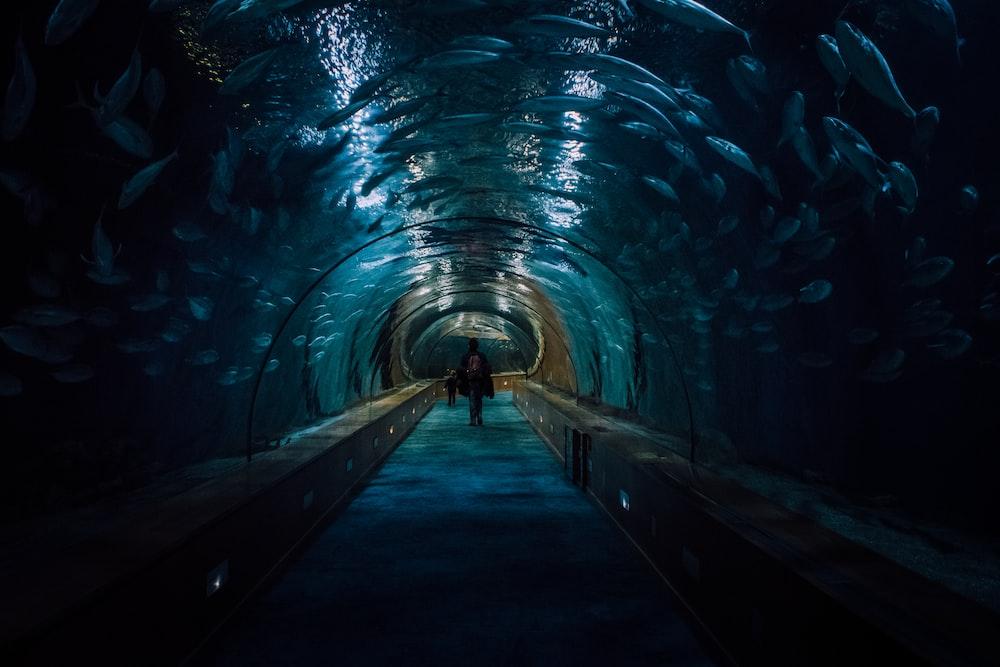 Image Description: people walking through an aisle in an aquarium, bathed in gentle blue light.