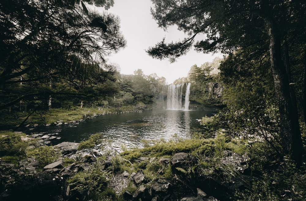 falls surrounded trees