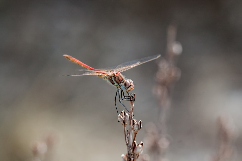 closeup focus photography of dragonfly