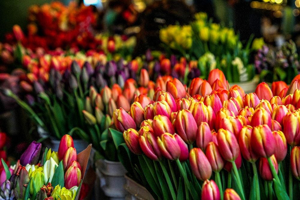 closeup photo of multicolored petaled flowers