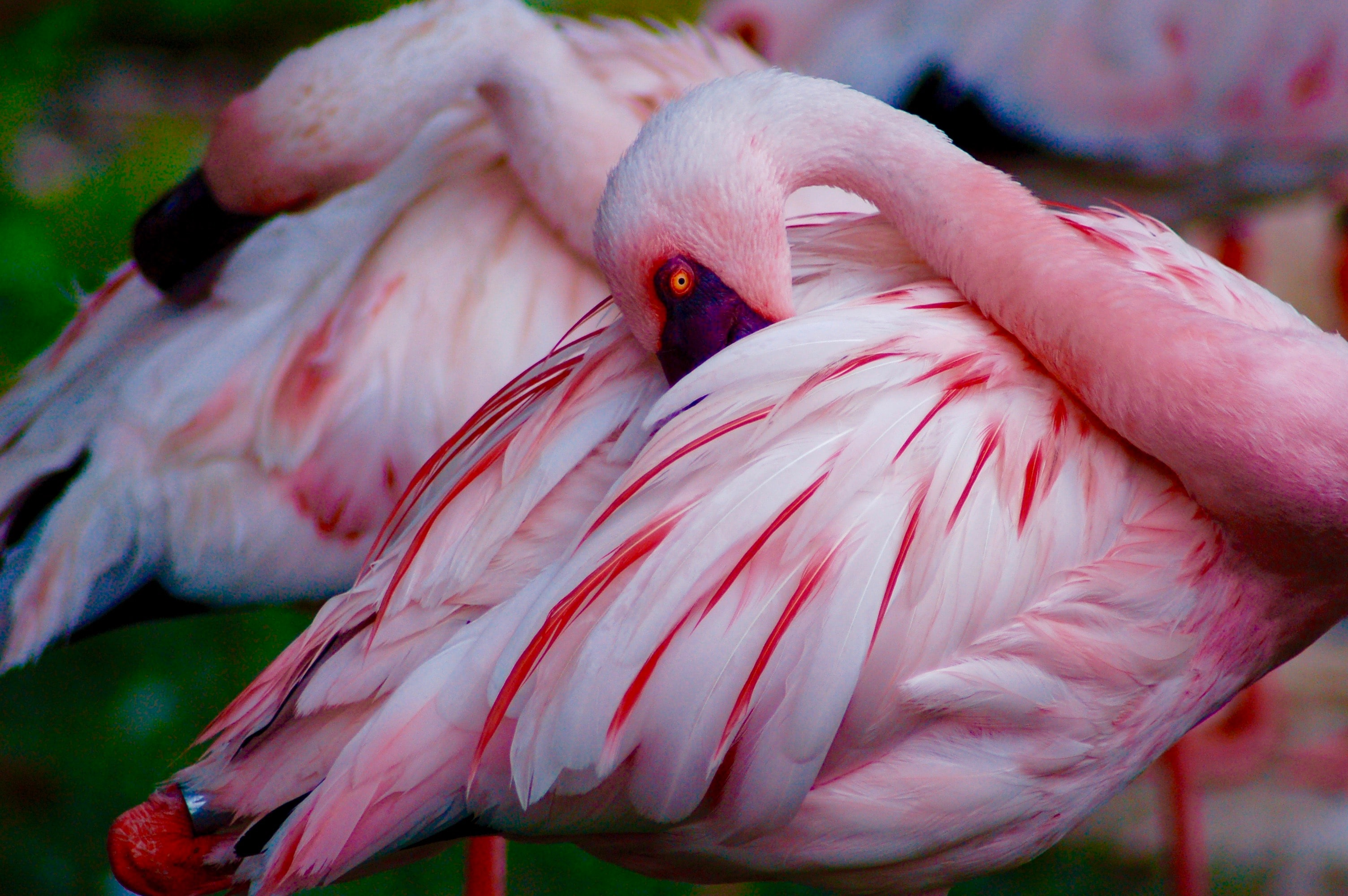 closeup photo of two pink-and-white birds